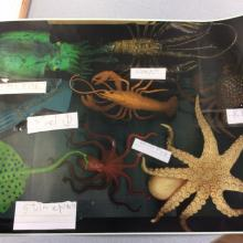 labels for sea creatures